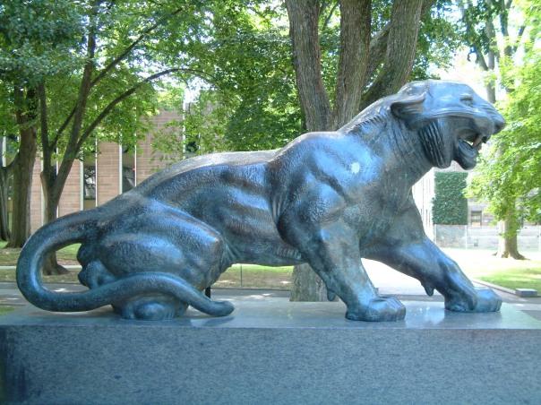 Princeton_University_Cleo_tiger